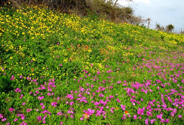 Wildflowers at LBJ State Park, Stonewallch-3
