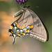 Butterfly by Jack Nevitt
