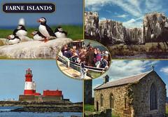 UK - Farne Islands