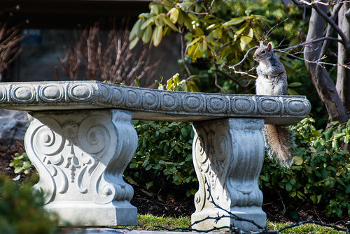 Squirrel poses as scuplture - #92/365 by PJMixer