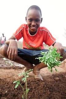 Growing Tomatoes at School: A young boy plants tomatoes in a school garden