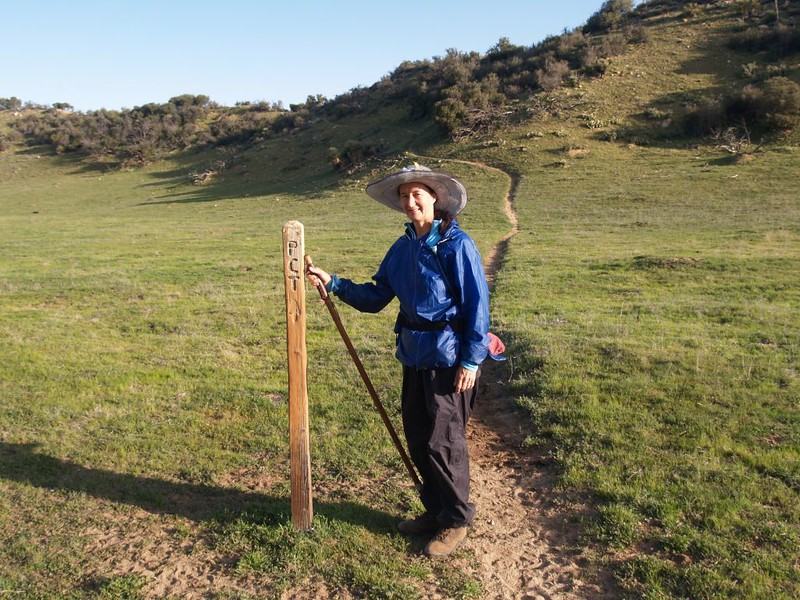 PCT guide post worn down by cows rubbing up against it