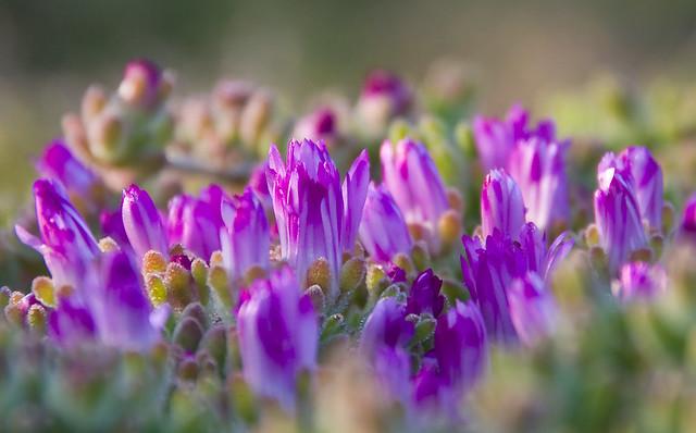 April 9 Tiny Flowers