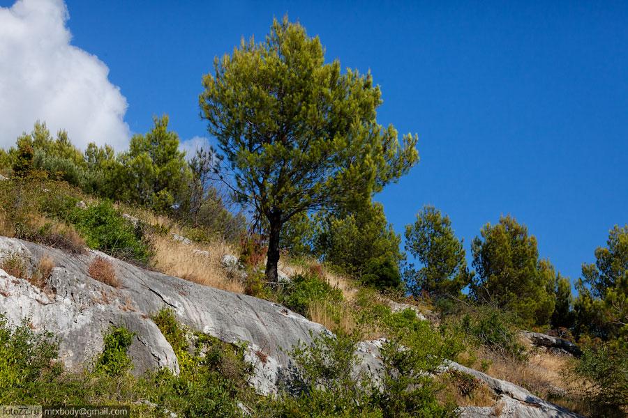 22-Wild-Makarska