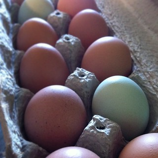 Pastured eggs of Fiesta Farm