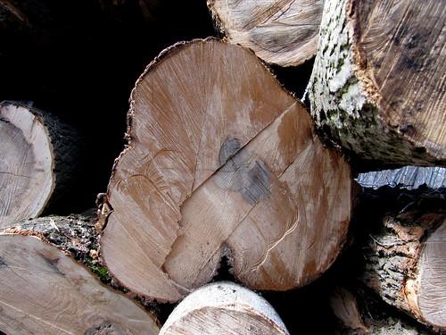 Baum-Herz 1 macht Kopfstand