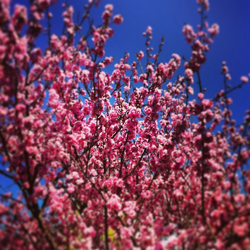 office park cherry