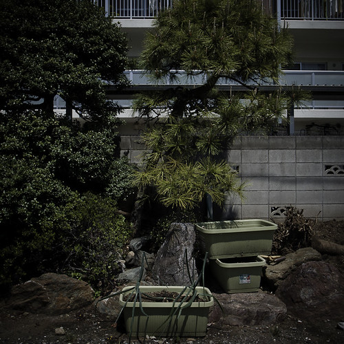 Industrialized Garden with Concrete Wall