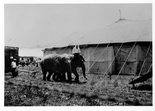Al G. Barnes Circus, Jefferson City, MO (MSA)