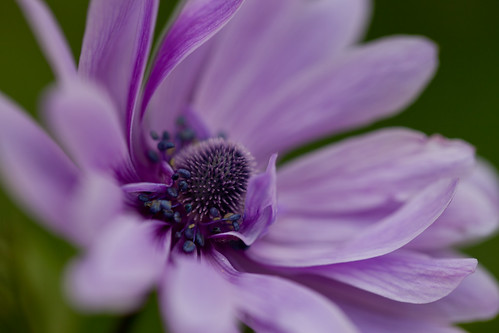 Pretty in Purple by conniee4 aka Connie Etter