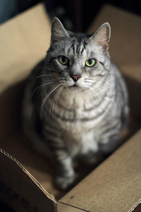 032713_catBox