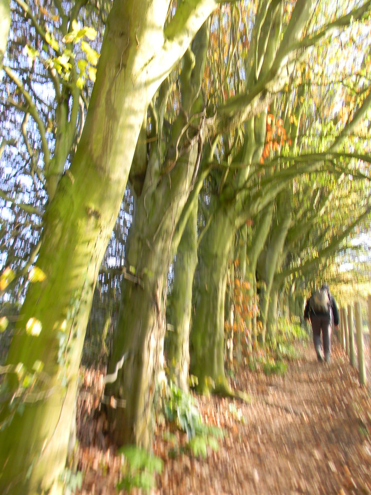 Trees Bekesbourne Circular
