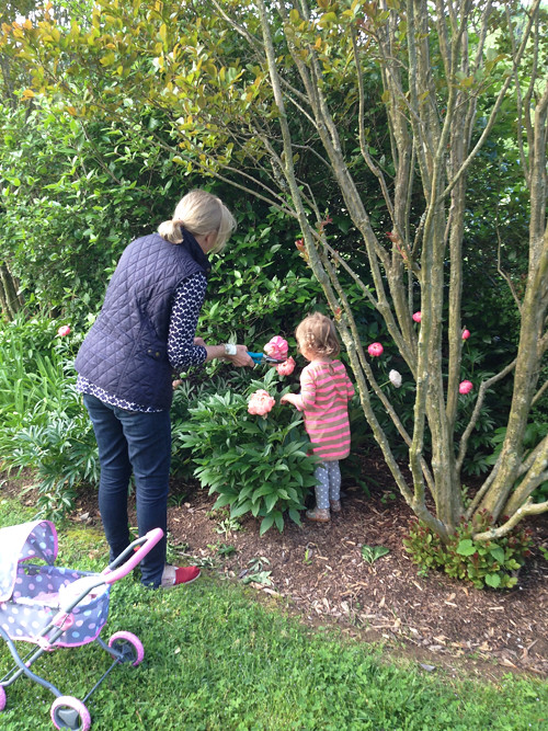 picking-peonies