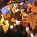 Fall-time Leaves by fontograph