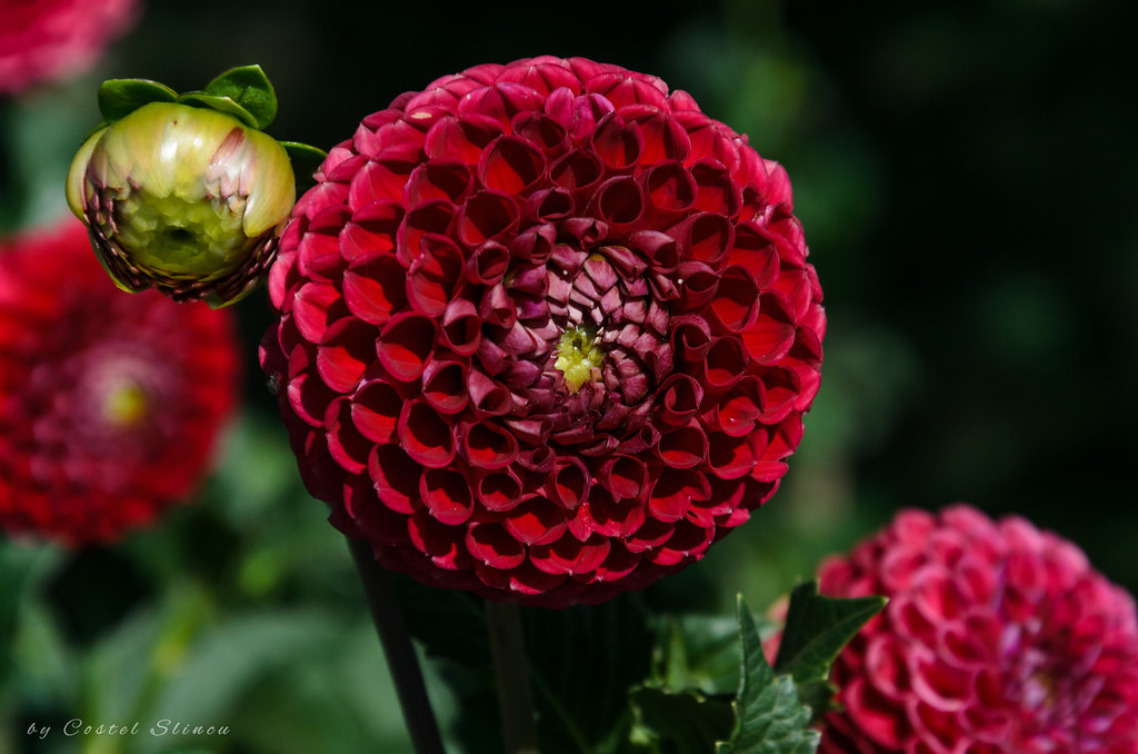 Flowers, Botanical Garden Iasi
