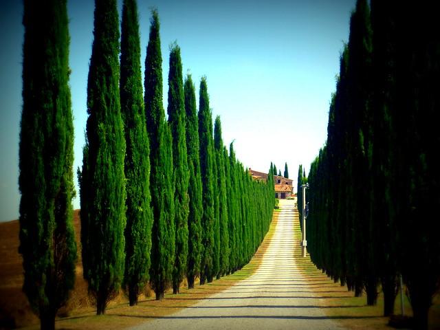 viale con cipressi nel Val d'Orcia-Toscana