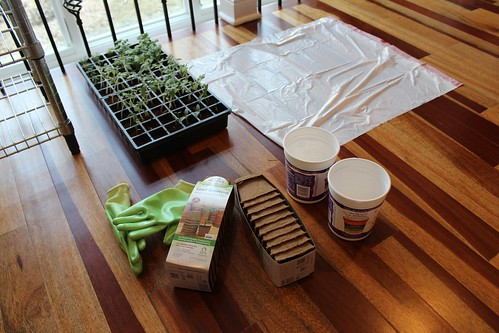 Thinning and repotting station | coppertopkitchen.blogspot.com
