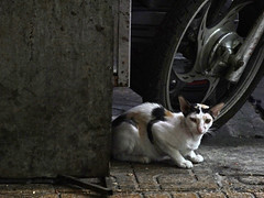Saigon. The cat next door
