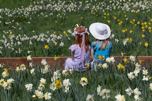 Daffodil Hill-17