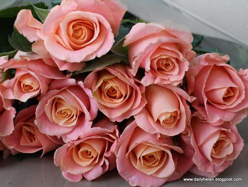 dailyhelen_flowers by dailyhelen