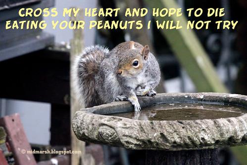 Squirrel Tale 1.jpg