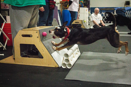 Flyball Practice April 2013-1518
