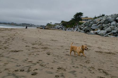 Dog beach santa cruz