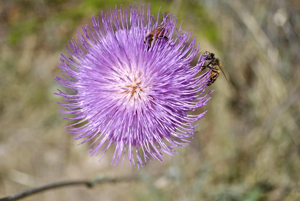 flowerbees