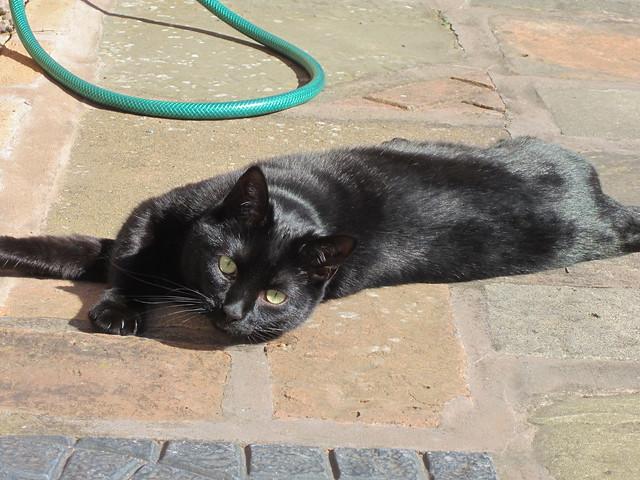 sunny Flo (10)