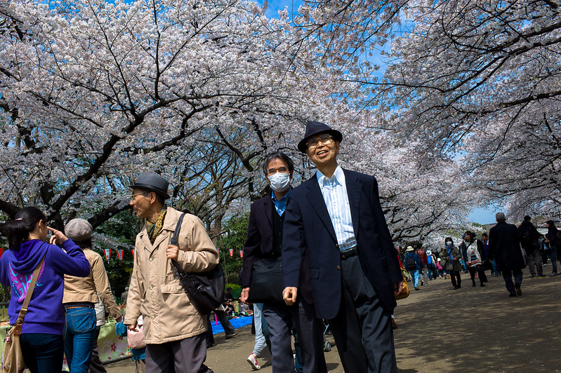 Tourists traipsing down the Sakura tree-lined avenues of Ueno Park