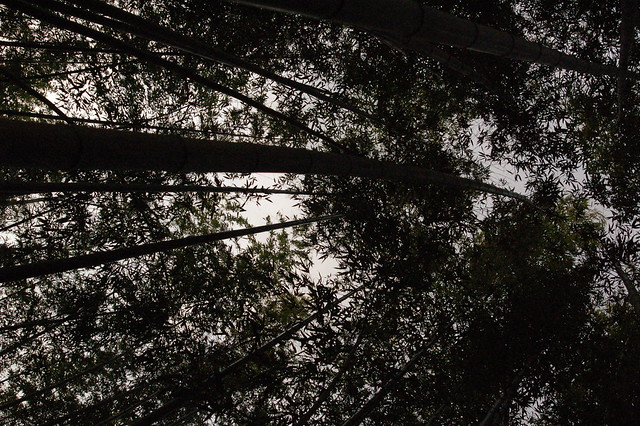 0811 - Arashiyama bosque bambú
