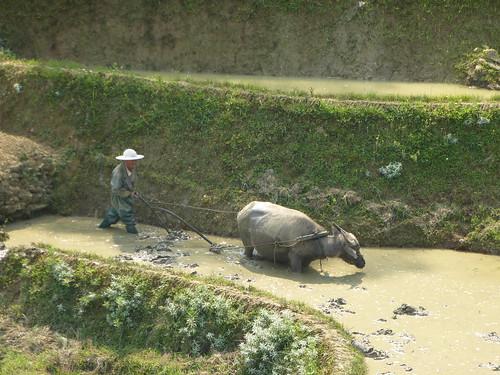 Yunnan13-Yuanyang 7 (8)