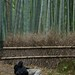 Arashiyama Bamboo Forest 4 by RachelF2SEA