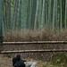 Arashiyama Bamboo Forest 4 by RachelF2SEA