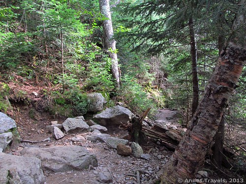 The trail to The Gorge, Ammonoosuc Ravine, White Mountain National Forest, New Hampshire