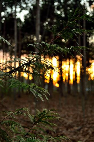 trees sunset sky orange plants sunlight tree green leaves portland woods bokeh blurred portlandmaine