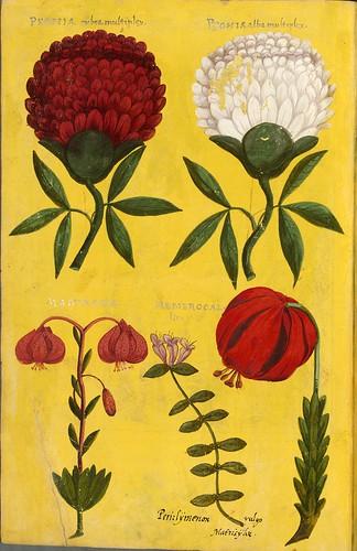 020-Pagina decorada con flores-Descripción del bautismo de la dama Isabel de Hesse-1598-Biblioteca Estatal de Baviera