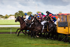 Out of the gate at Avondale Racecourse, Auckland, New Zealand