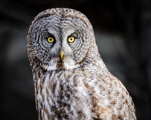 2013 05 04 Owl