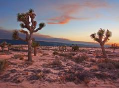 Mojave Desert at Dusk