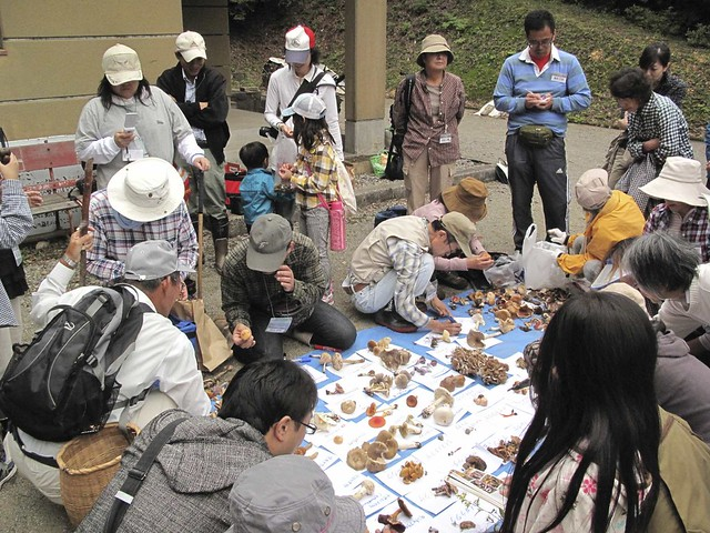大勢で集めたキノコに,先生お二人は大忙し.参加者はメモを取りながら,生態を聴きながら次々に名前が付いていく様子を見守った.