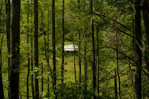 trees june tom virginia cabin nikon va d40 mouthofwilson 2013