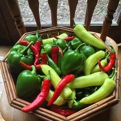 A bevy of peppers! #habitablespaces #sustainableliving #wwofusa