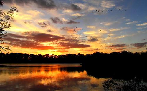 sunset strawneckedibis baldivis wellardwetlands