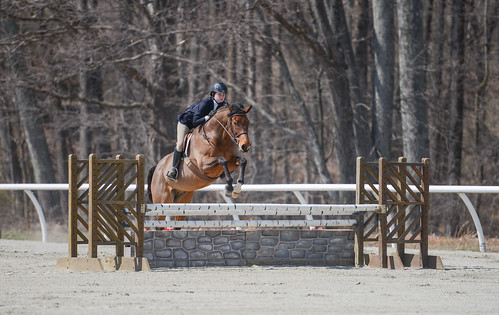 sports animal animals jumping equine theodore equitation sweetbriarcollege alidavidson