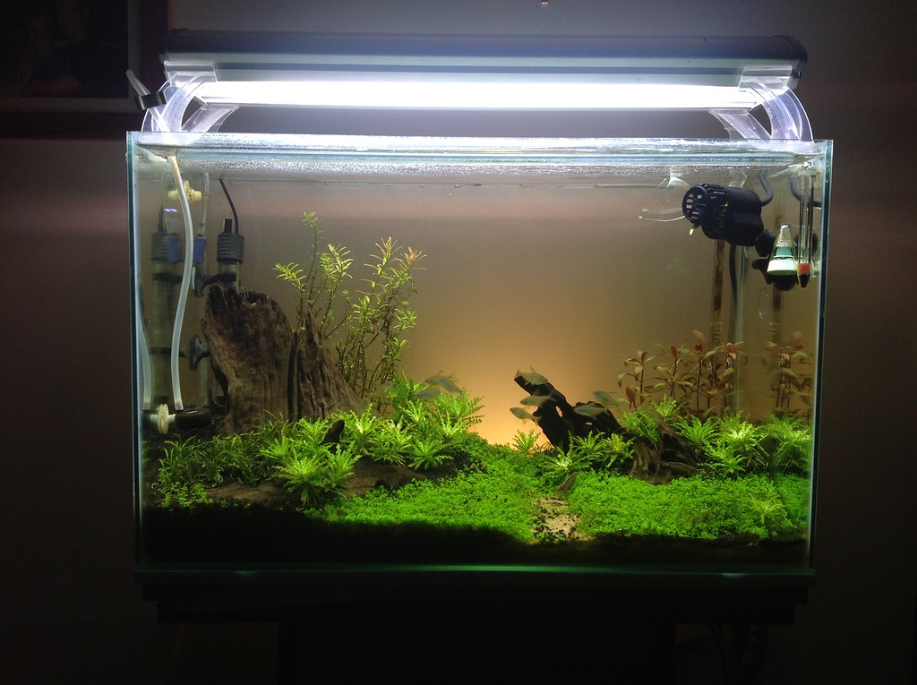 Re aquarium plants uk mail order aquarium plants for Mail order fish