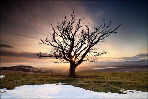 sunset sun snow tree field landscape climb scotland spring ray angus walk farm hill perthshire beam strathmore beech clyne