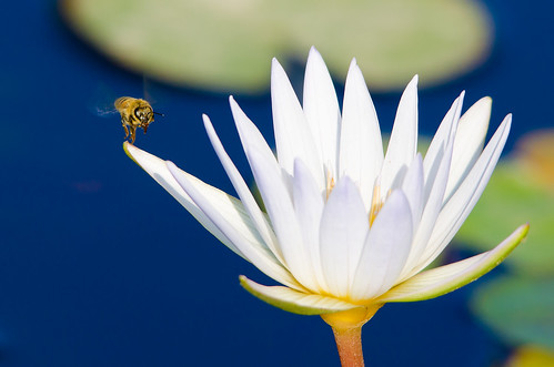 Flower and Bee - Eco Pond Kfar Saba