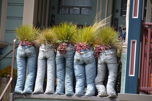 Plants In Jeans Flickr Photo Sharing