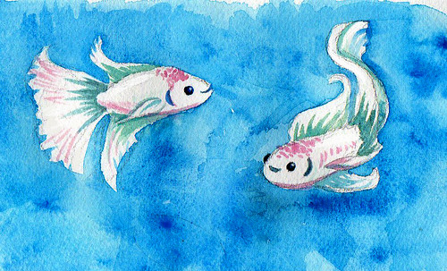 Betta watercolour